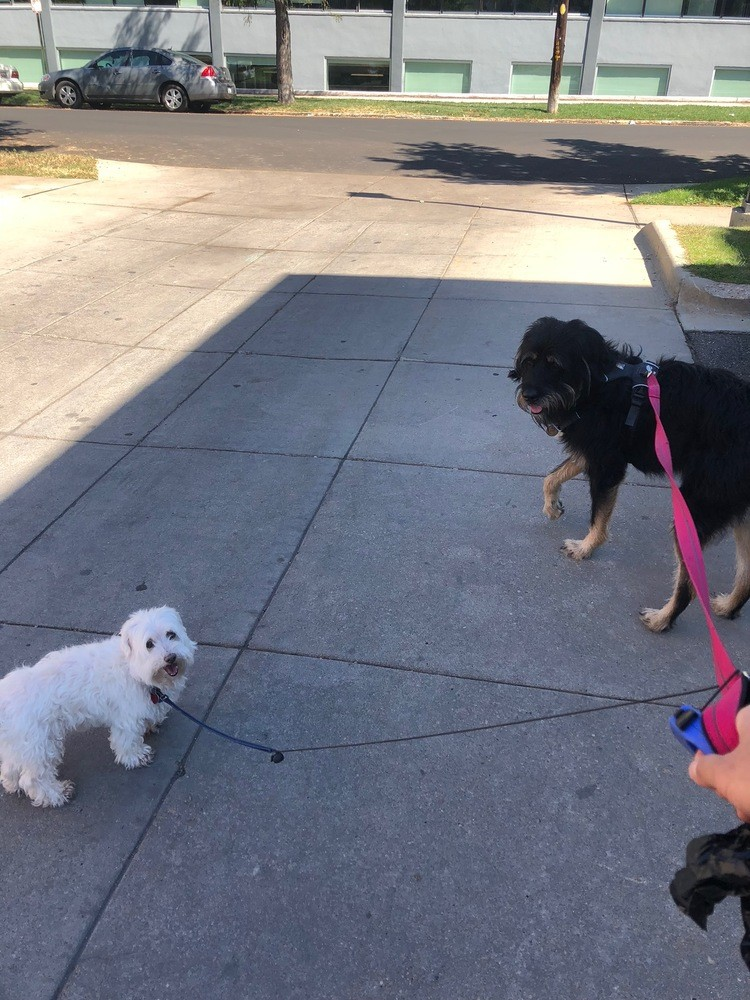 Berkeley the rottweiler mix with Lucca the maltese