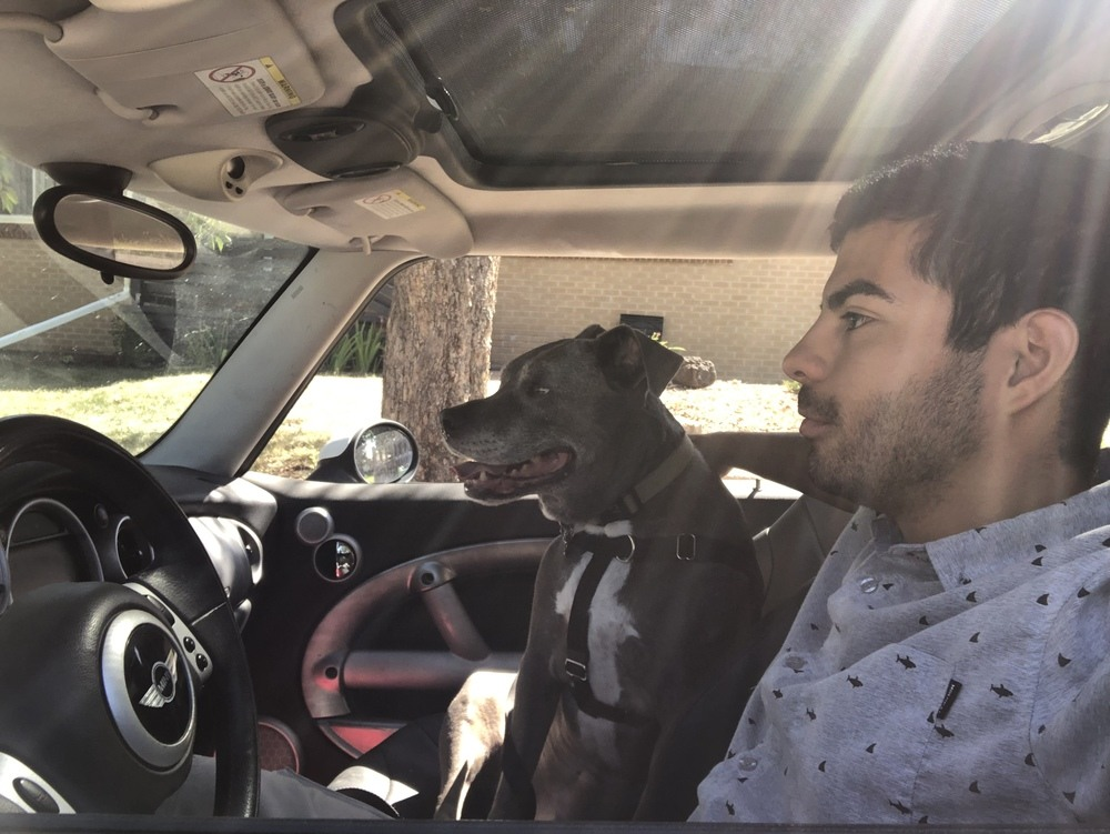Efrain driving with Mac the pitbull in passenger seat